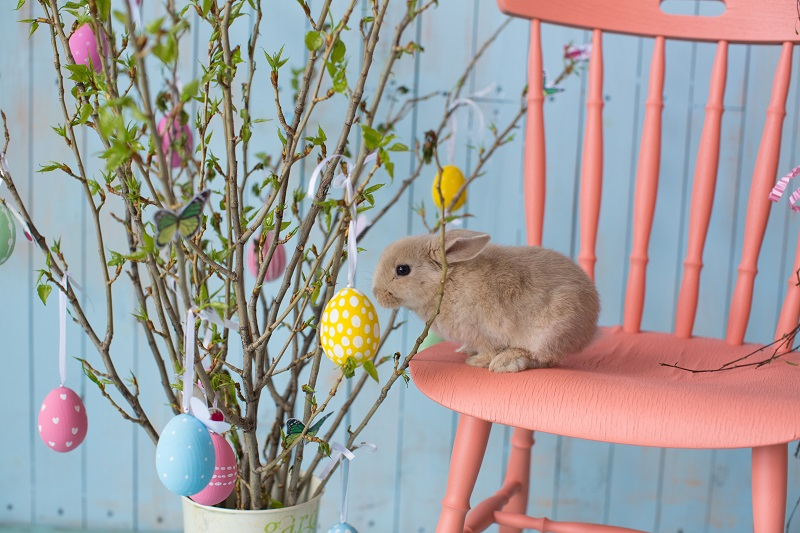 Cute rabbit sat on pink chair next to Easter tree with eggs hung in branches