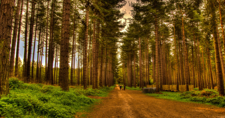 Our Favourite Walks in the East Midlands