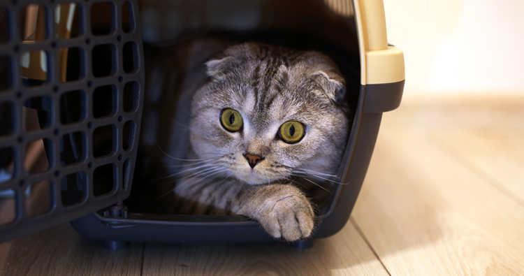 Top tips on moving house with a cat